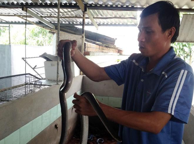 Nuôi hàng trăm nghìn con rắn, thu về tiền tỷ mỗi năm - Ảnh 4.