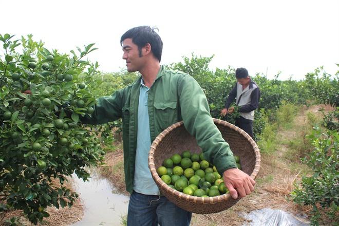 Thu nhập hàng trăm triệu/năm nhờ về làng thuê đất trồng chanh 4 mùa và táo ngọt - Ảnh 1.