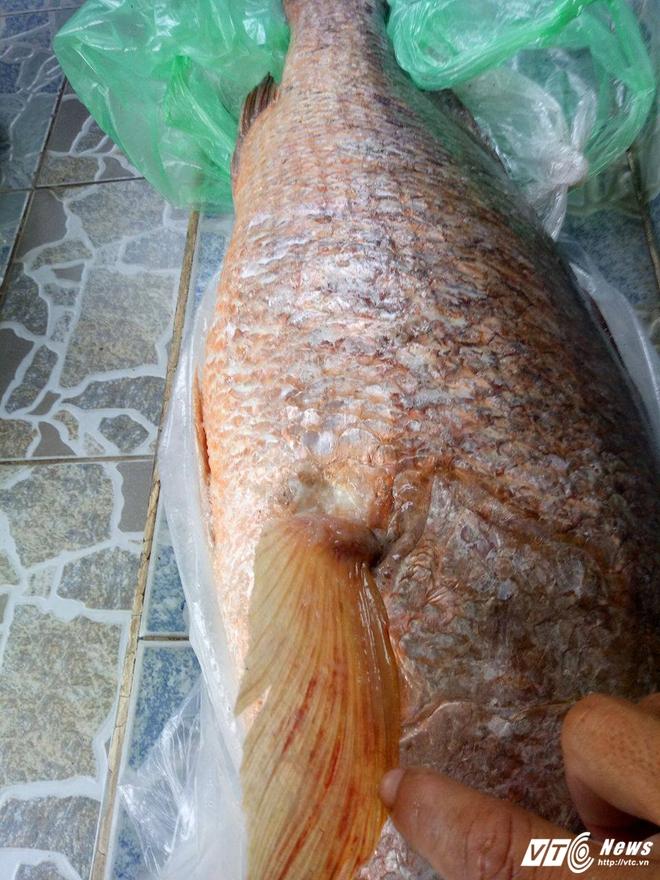 Nam thanh niên câu được cá nghi sủ vàng nặng hơn 7 kg trên biển Vũng Tàu - Ảnh 1.