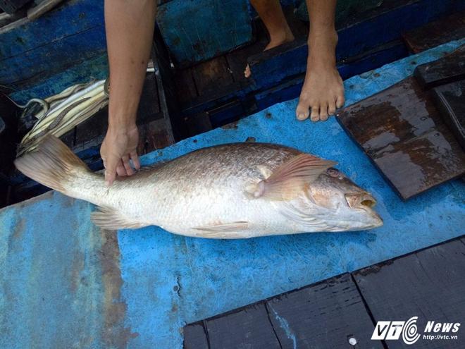 Nam thanh niên câu được cá nghi sủ vàng nặng hơn 7 kg trên biển Vũng Tàu - Ảnh 2.