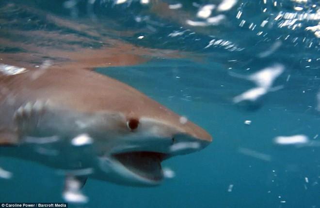 Oằn mình trong đau đớn, cá mập bỏ mạng vì bị đánh hội đồng - ảnh 2