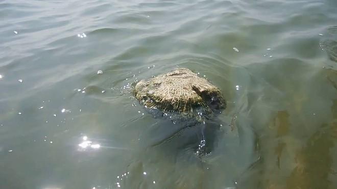 Khoa học giải mã thành công bí ẩn của loại đá có thể nổi trên mặt nước 3