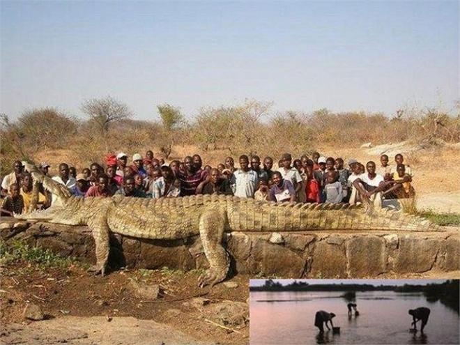 Tom Hai ngón - Con cá sấu khổng lồ, khát máu bậc nhất châu Mỹ - Ảnh 3.