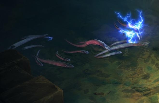 Cá piranha hiếu chiến, hung hăng thật, nhưng gặp đối thủ này là tắt điện - Ảnh 3.