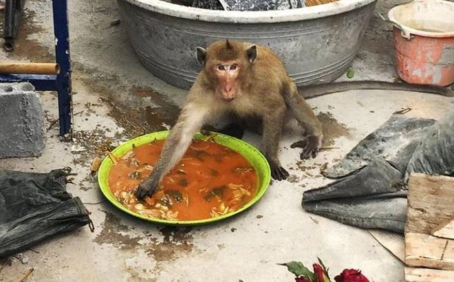 Hải quân Thái Lan tung vũ khí bí mật chống đám khỉ đạo tặc