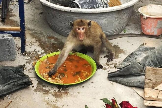 Hải quân Thái Lan tung vũ khí bí mật chống đám khỉ đạo tặc - Ảnh 2.