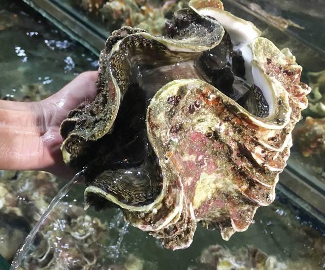 Đại gia Hà thành ăn con ốc vô địch toàn cầu: 10kg, giá 4 triệu - Ảnh 2.
