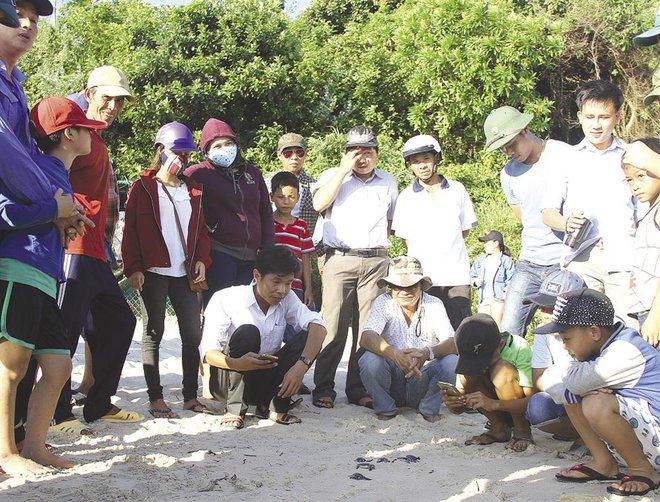 Sau hơn 10 năm, rùa biển lại bơi ở Cù Lao Chàm - Ảnh 1.