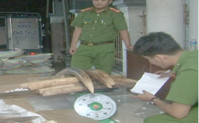 Chiến sĩ biên phòng tham gia vận chuyển lậu gần 1,5 tấn ngà voi
