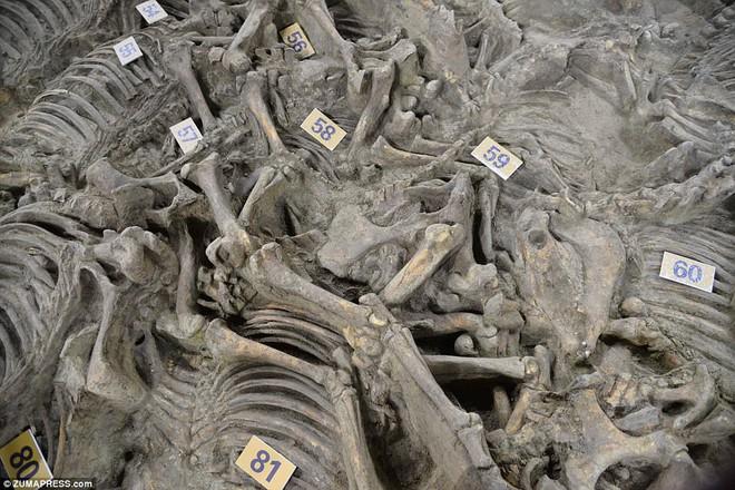 Bí ẩn cổ mộ 2.400 năm chứa hơn 100 xác ngựa ở Trung Quốc - Ảnh 3.