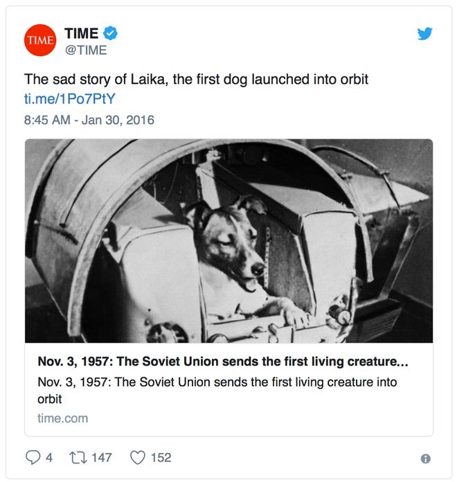 Câu chuyện về chú chó đầu tiên được đưa lên vũ trụ: Nỗi đau của Laika và sự thật phũ phàng phía sau - Ảnh 1.