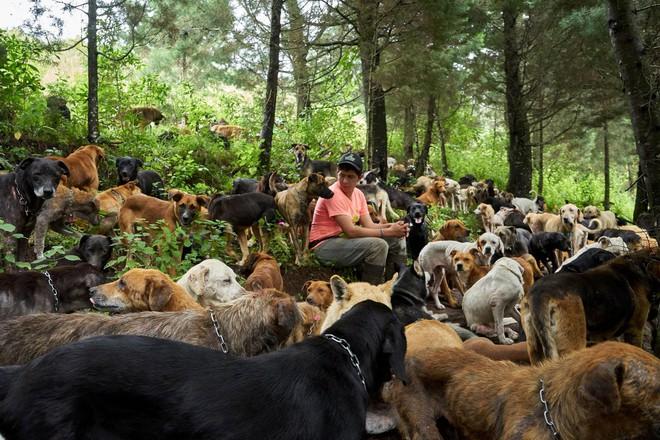 Thiên đường của hơn 900 chú chó hoang: Địa điểm hội yêu chó nhất định sẽ thích mê khi ghé thăm - Ảnh 1.
