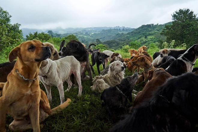 Thiên đường của hơn 900 chú chó hoang: Địa điểm hội yêu chó nhất định sẽ thích mê khi ghé thăm - Ảnh 2.