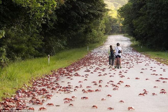 Hàng triệu sinh vật nhuộm đỏ bờ biển Úc, nếu lại gần, bạn sẽ không nỡ giẫm lên - Ảnh 3.