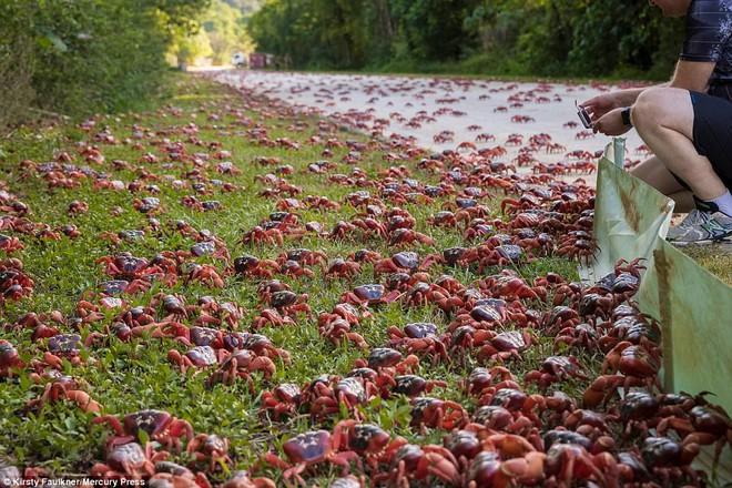 Hàng triệu sinh vật nhuộm đỏ bờ biển Úc, nếu lại gần, bạn sẽ không nỡ giẫm lên - Ảnh 6.
