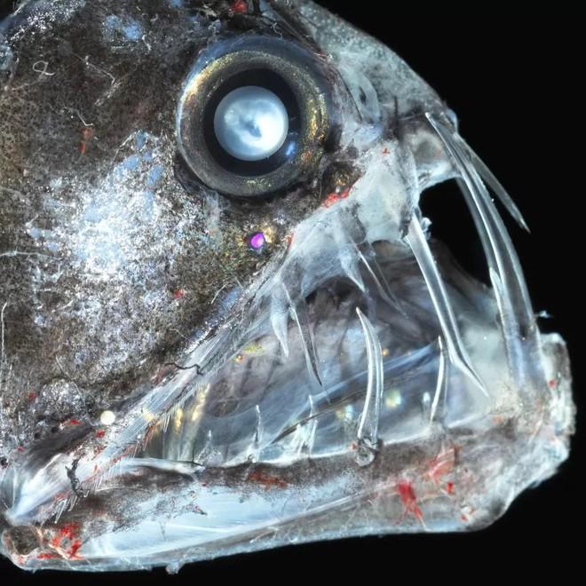 Những sinh vật kỳ dị, xứng danh quái vật đáng sợ bậc nhất dưới đại dương - Ảnh 9.