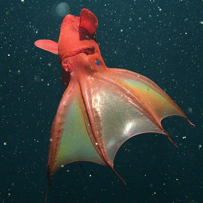 Những sinh vật kỳ dị, xứng danh quái vật đáng sợ bậc nhất dưới đại dương - Ảnh 15.