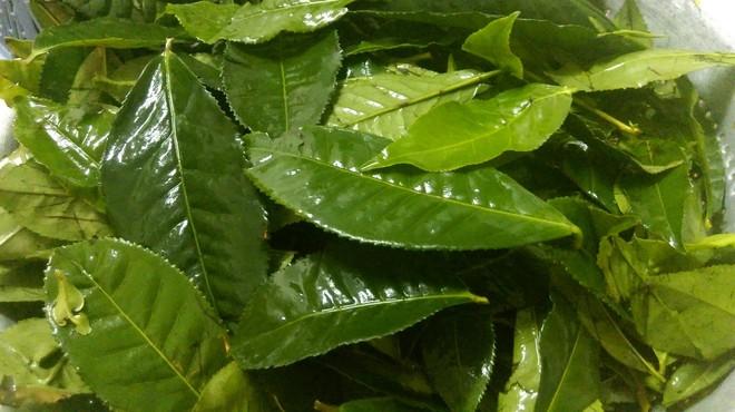 Loại lá có tác dụng phòng ngừa ung thư số 1 thế giới: Bán nhiều ở chợ Việt Nam với giá rẻ - Ảnh 2.