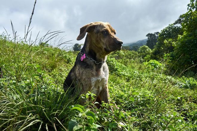 Thiên đường của hơn 900 chú chó hoang: Địa điểm hội yêu chó nhất định sẽ thích mê khi ghé thăm - Ảnh 14.