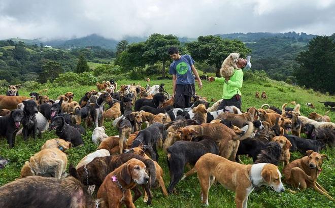 """""""Thiên đường"""" của hơn 900 chú chó hoang: Địa điểm hội yêu chó nhất định sẽ thích mê khi ghé thăm"""