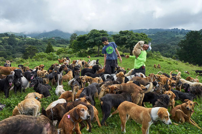 Thiên đường của hơn 900 chú chó hoang: Địa điểm hội yêu chó nhất định sẽ thích mê khi ghé thăm - Ảnh 3.