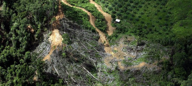 Theo tạp chí của Mỹ: Trái đất giờ đã nguy cấp đến mức trồng cây cũng không còn cứu được chúng ta - Ảnh 3.