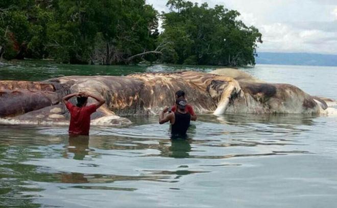 Những sinh vật bí ẩn to như quái vật thời tiền sử dạt vào bờ biển