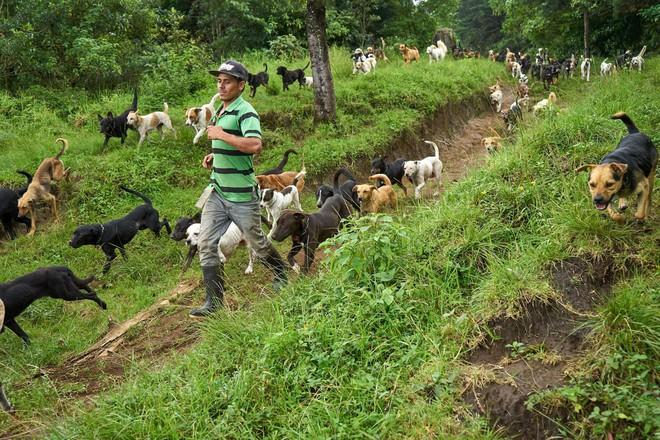 Thiên đường của hơn 900 chú chó hoang: Địa điểm hội yêu chó nhất định sẽ thích mê khi ghé thăm - Ảnh 4.