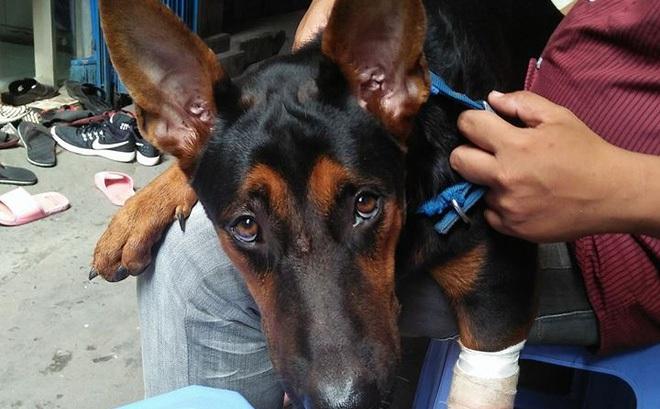 Sự trở về của chú chó và những vết thương trên mình gây ám ảnh dân mạng Việt