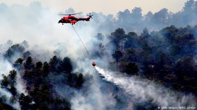 Hơn 4 triệu ha rừng ở Mỹ cháy thành tro bụi,