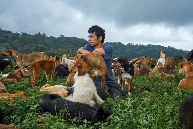 Thiên đường của hơn 900 chú chó hoang: Địa điểm hội yêu chó nhất định sẽ thích mê khi ghé thăm - Ảnh 5.