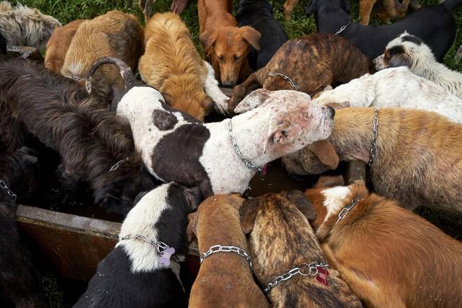 Thiên đường của hơn 900 chú chó hoang: Địa điểm hội yêu chó nhất định sẽ thích mê khi ghé thăm - Ảnh 6.