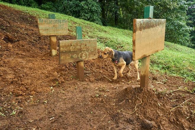 Thiên đường của hơn 900 chú chó hoang: Địa điểm hội yêu chó nhất định sẽ thích mê khi ghé thăm - Ảnh 9.