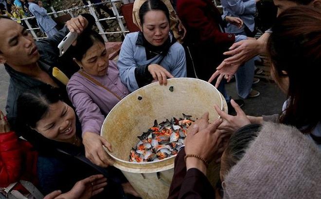 Đề nghị Bộ Công an vào cuộc vụ phóng sinh cá chim trắng
