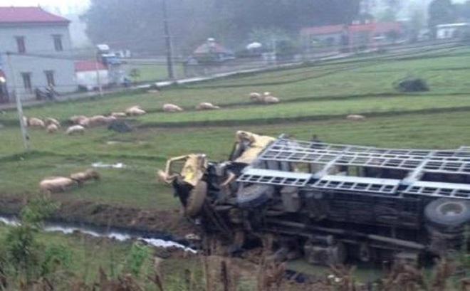 Xe tải bị đâm lật xuống ruộng, hàng trăm con lợn sổng ra ngoài