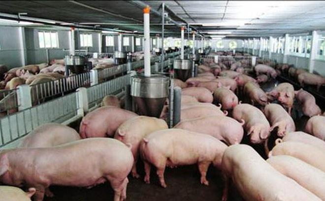 """Thịt lợn rẻ hơn rau, Bộ Nông nghiệp """"cầu cứu"""" Thủ tướng"""