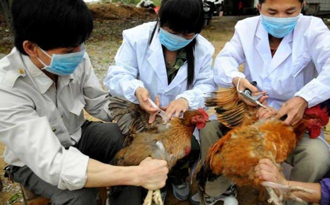 Bùng phát dịch cúm virus H7N9, tốc độ nhanh gấp 1.000 lần