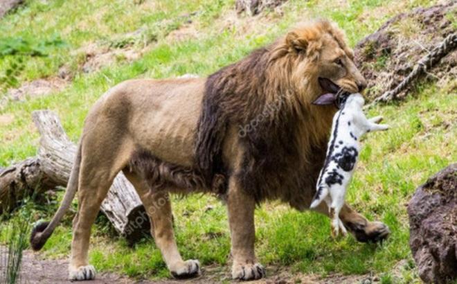 """Chi cục Thú y TP. HCM lên tiếng trước tin bịa đặt về việc """"đề nghị Thảo Cầm Viên mua lại chó hoang làm mồi cho sư tử"""""""