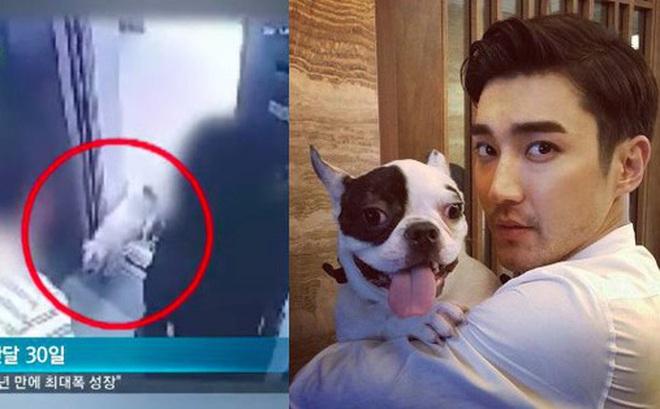 SBS công bố CCTV hiện trường vụ chó của Siwon cắn CEO tử vong, gián tiếp chỉ ra gia đình anh nói dối