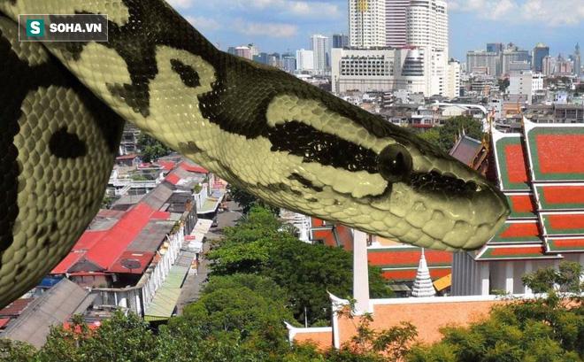 """Hàng nghìn con rắn """"đột nhập"""" vào nhà dân ở Bangkok, Thái Lan: Nguyên nhân đến từ đâu?"""