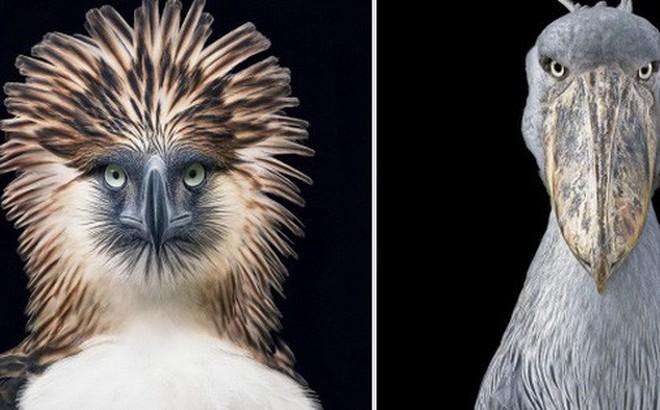 Động lòng ánh mắt trong bộ ảnh các loài động vật có nguy cơ tuyệt chủng