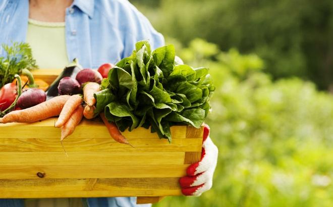 Các kênh bán hàng mà chủ trang trại thực phẩm hữu cơ nhỏ lẻ không nên bỏ lỡ