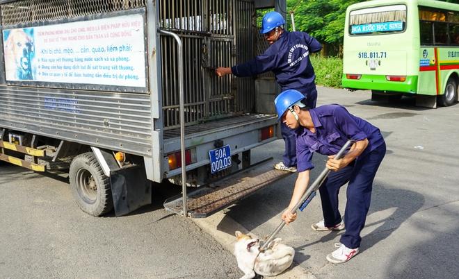 Dẫn chó cưng đi chợ không rọ mõm, người dân bất ngờ khi bị Đội săn bắt chó TP HCM hốt về - Ảnh 8.