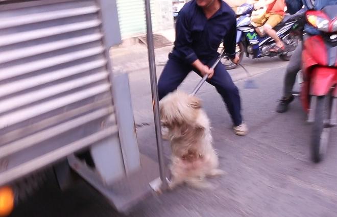 Dẫn chó cưng đi chợ không rọ mõm, người dân bất ngờ khi bị Đội săn bắt chó TP HCM hốt về - Ảnh 12.