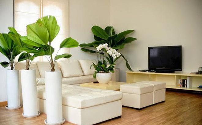 Image result for cây trong phòng khách