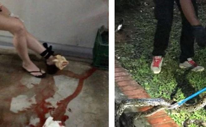Singapore: Đi tìm mèo lạc lúc 4 giờ sáng, người phụ nữ bị trăn dài 3m tấn công
