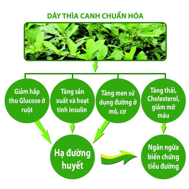 Phát hiện: Cây quý trị tiểu đường mới được ghi vào dược điển Việt Nam - Ảnh 4.