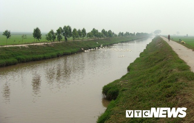 Ngôi làng ở Hưng Yên: Cứ đào xuống đất là trúng mộ thân cây vài ngàn năm tuổi - Ảnh 3.