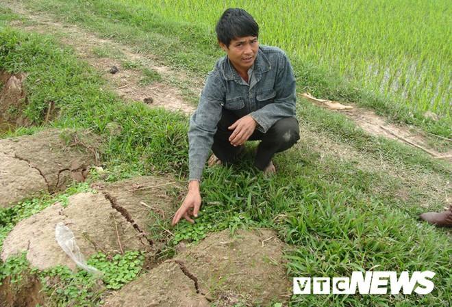 Ngôi làng ở Hưng Yên: Cứ đào xuống đất là trúng mộ thân cây vài ngàn năm tuổi - Ảnh 4.