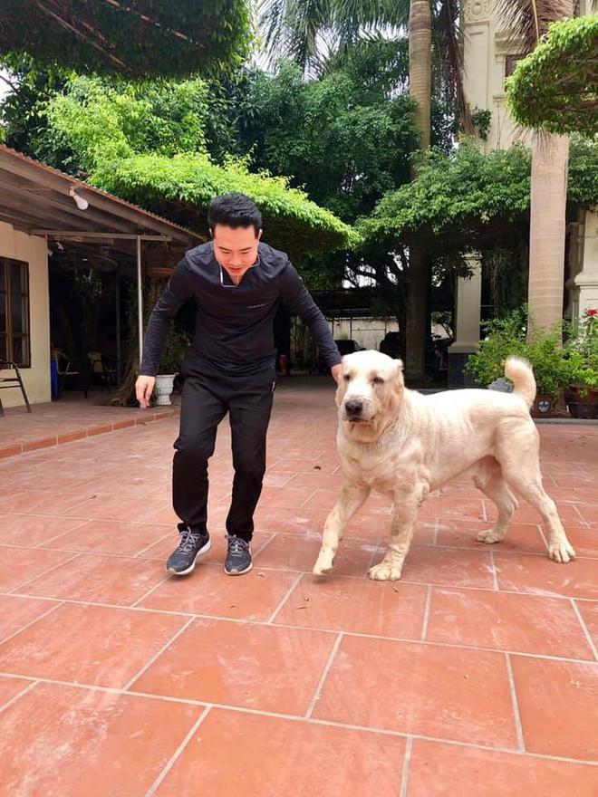 """Chó bố nặng gần 90 kg và đàn chó con hiếm gây sốt"""" mạng xã hội Việt - Ảnh 7."""